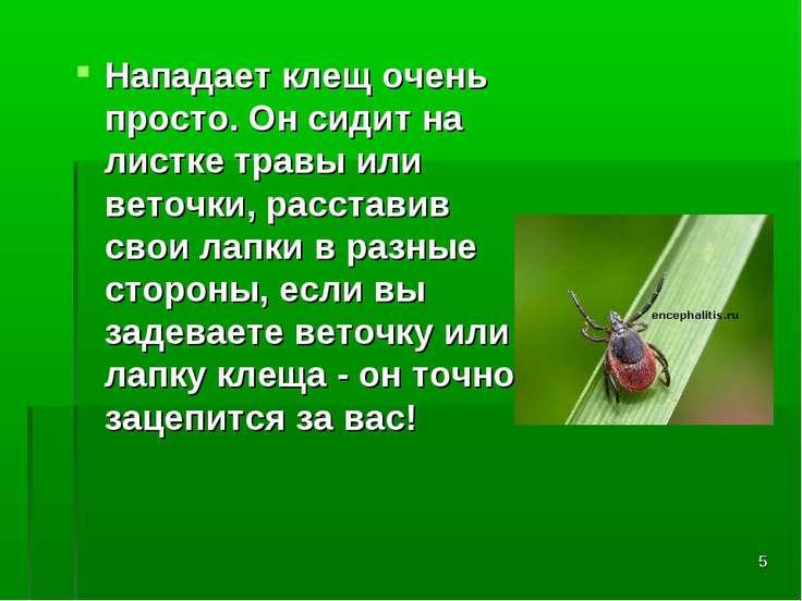 * Нападает клещ очень просто. Он сидит на листке травы или веточки, расставив...