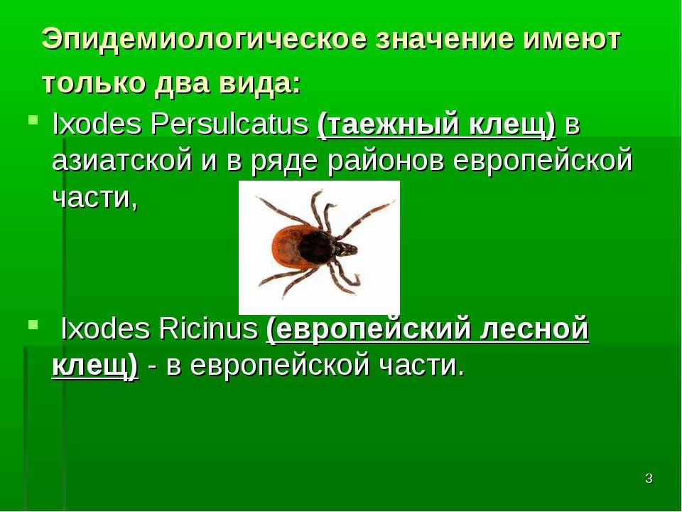 * Эпидемиологическое значение имеют только два вида: Ixodes Persulcatus (таеж...