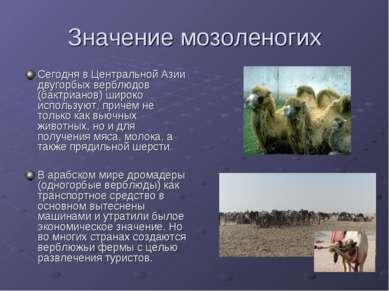 Значение мозоленогих Сегодня в Центральной Азии двугорбых верблюдов (бактриан...