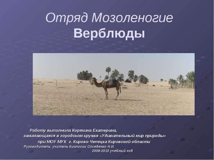 Отряд Мозоленогие Верблюды Работу выполнила Корякина Екатерина, занимающаяся ...