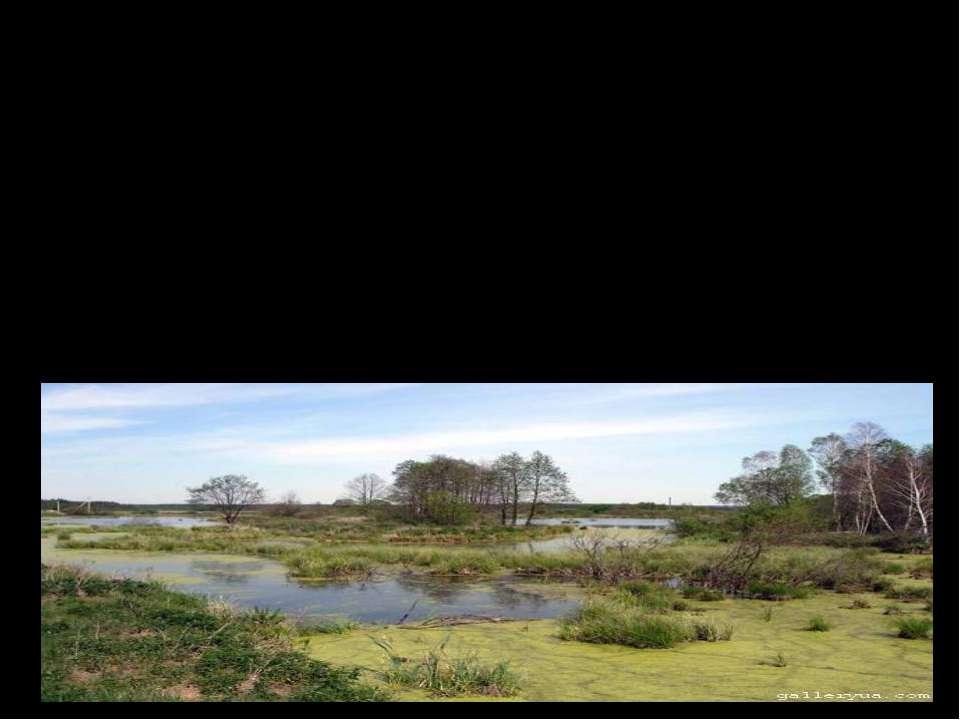 Торф – ценнейший природный биологический материал, образующийся естественным ...