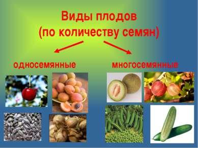 Виды плодов (по количеству семян) односемянные многосемянные