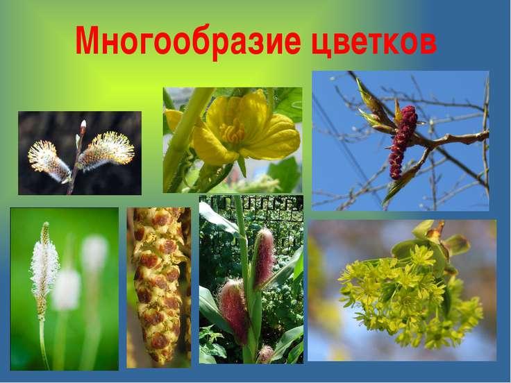 Многообразие цветков