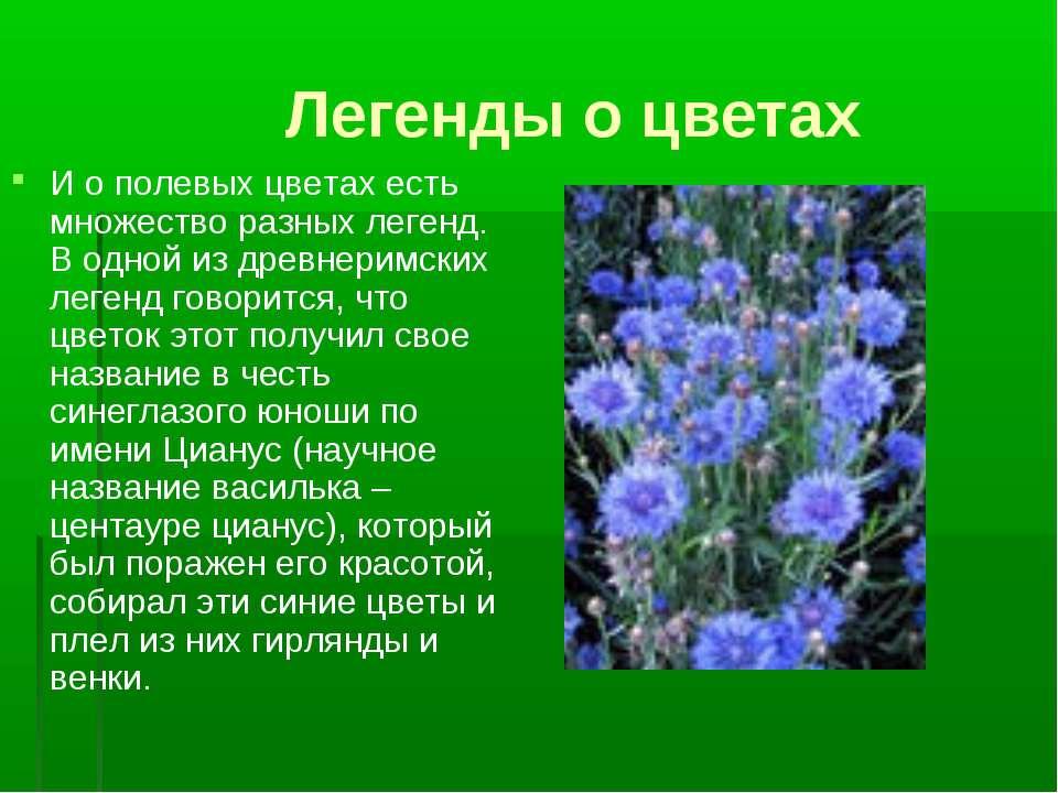 Легенды о цветах И о полевых цветах есть множество разных легенд. В одной из ...