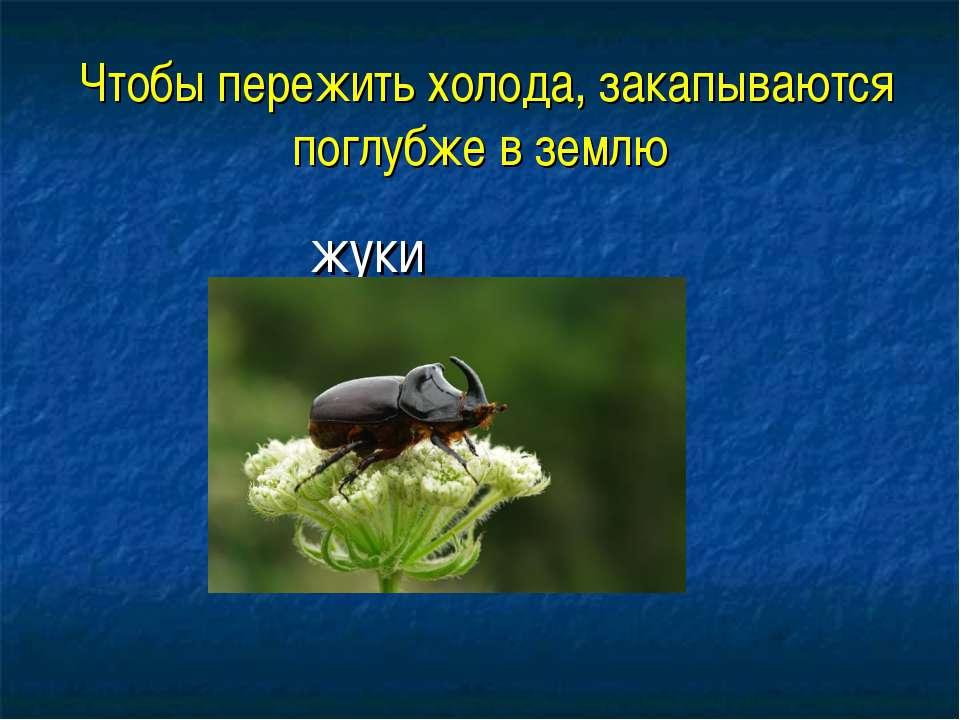 Чтобы пережить холода, закапываются поглубже в землю жуки