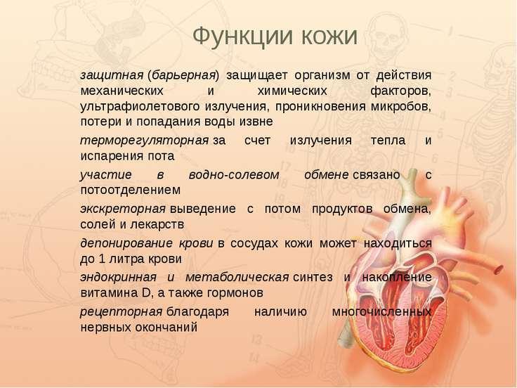 Функции кожи защитная(барьерная) защищает организм от действия механических ...