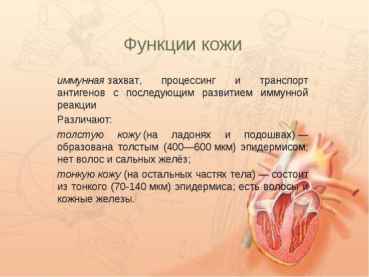 Функции кожи иммуннаязахват, процессинг и транспорт антигенов с последующим ...