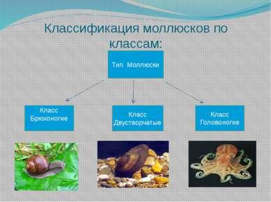 Класс Брюхоногие Класс Двустворчатые Класс Головоногие Тип Моллюски Классифик...