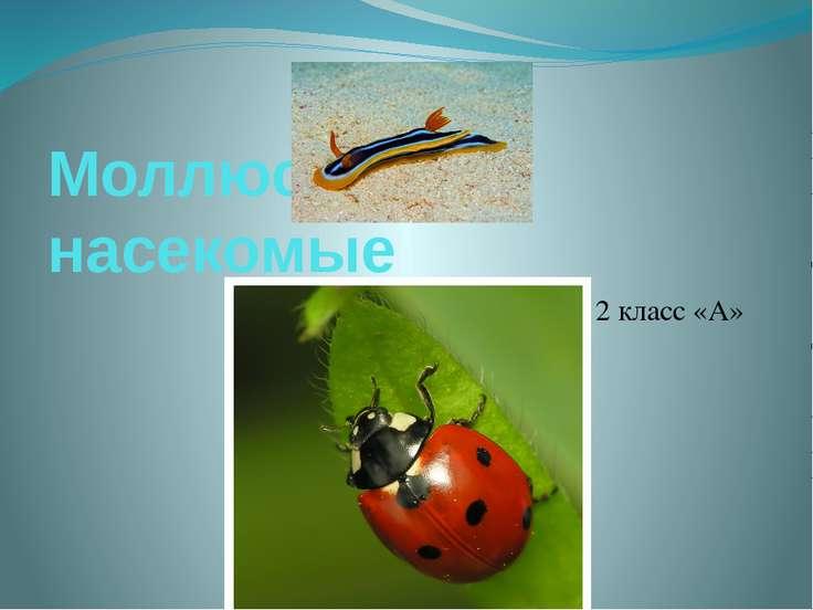 Моллюски и насекомые Гончарова Дарья 2 класс «А»