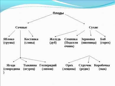 Плоды Сочные Сухие Ягода (смородина) Тыквина (огурец) Гесперидий (лимон) Орех...