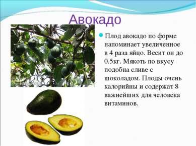 Авокадо Плод авокадо по форме напоминает увеличенное в 4 раза яйцо. Весит он ...