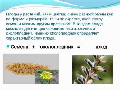 Плоды у растений, как и цветки, очень разнообразны как по форме и размерам, т...