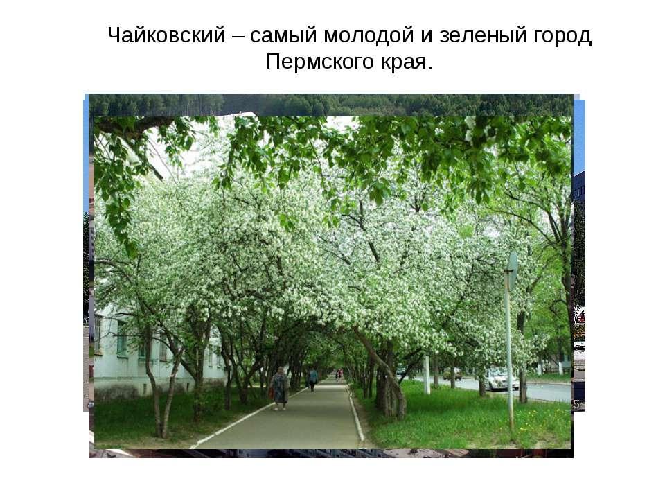 Чайковский – самый молодой и зеленый город Пермского края.