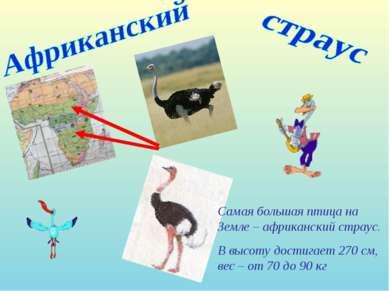 Самая большая птица на Земле – африканский страус. В высоту достигает 270 см,...