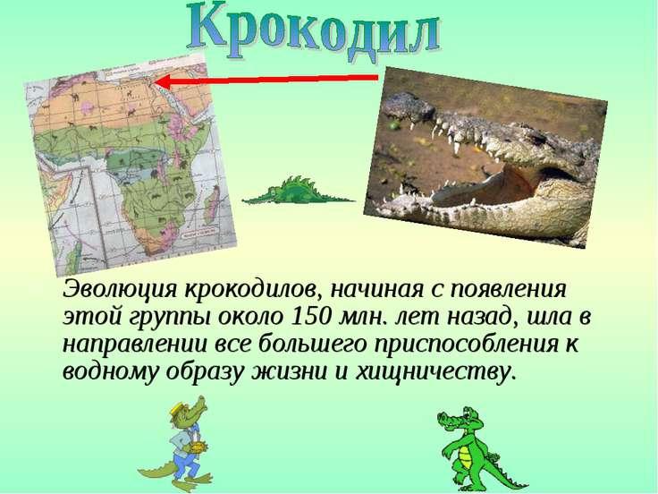 Эволюция крокодилов, начиная с появления этой группы около 150 млн. лет назад...