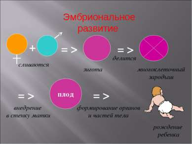 Эмбриональное развитие = > сливаются зигота делится многоклеточный зародыш = ...