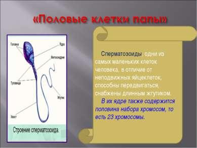 Сперматозоиды, одни из самых маленьких клеток человека, в отличие от неподвиж...