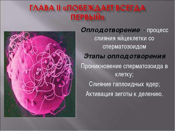 Оплодотворение - процесс слияния яйцеклетки со сперматозоидом Этапы оплодотво...