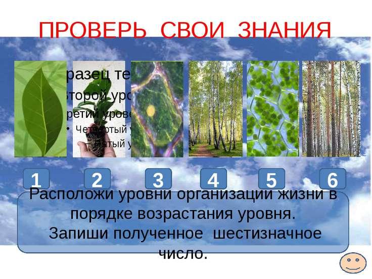 5 4 2 3 1 ПРОВЕРЬ СВОИ ЗНАНИЯ 1 2 3 4 5 6 6 Расположи уровни организации жизн...