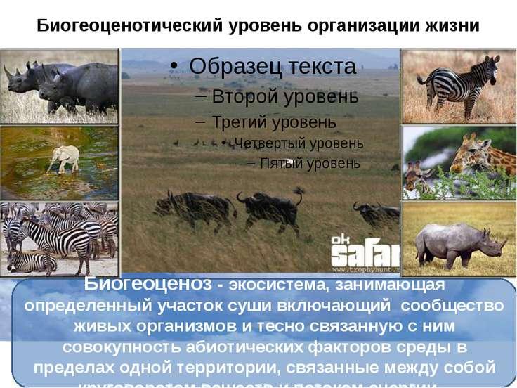 Биогеоценотический уровень организации жизни Биогеоценоз - экосистема, занима...