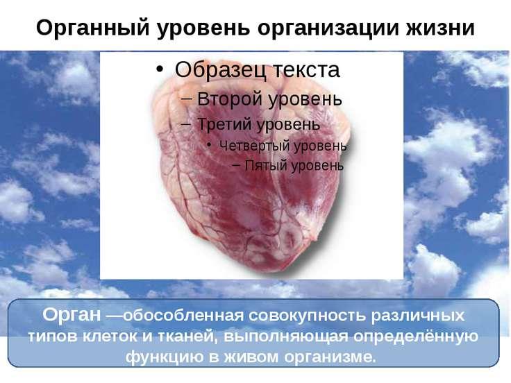Органный уровень организации жизни Орган—обособленная совокупность различных...