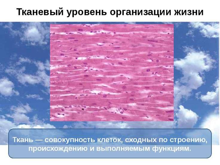 Ткань — совокупность клеток, сходных по строению, происхождению и выполняемым...