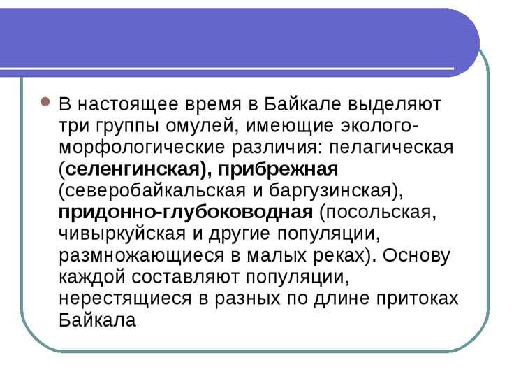 В настоящее время в Байкале выделяют три группы омулей, имеющие эколого-морфо...
