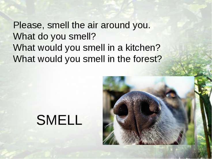 Please, smell the air around you. What do you smell? What would you smell in ...