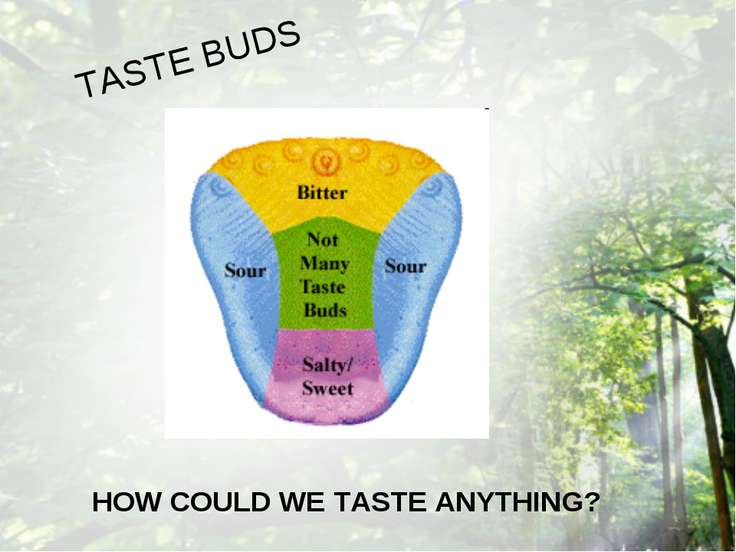 HOW COULD WE TASTE ANYTHING? TASTE BUDS