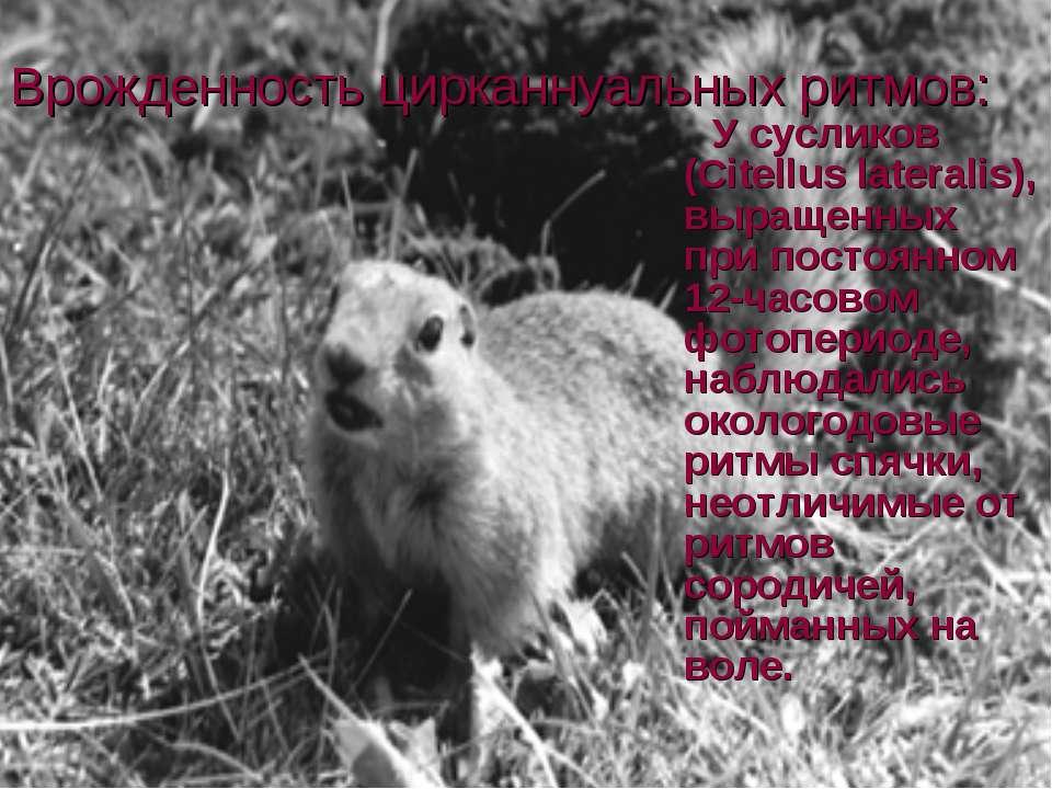 Врожденность цирканнуальных ритмов: У сусликов (Citellus lateralis), выращенн...