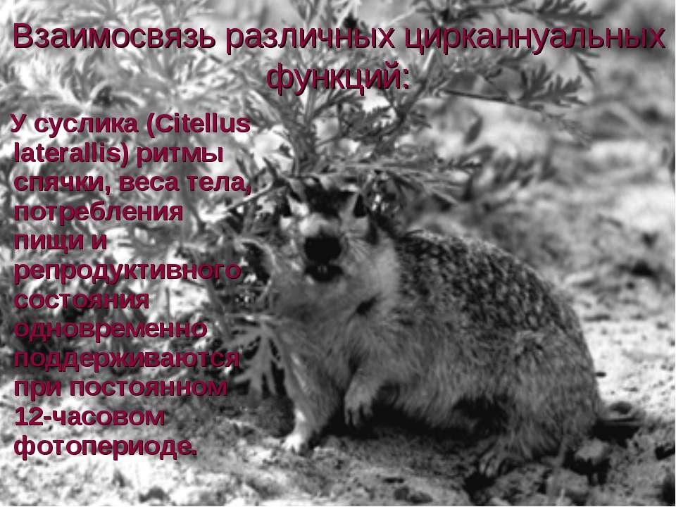 Взаимосвязь различных цирканнуальных функций: У суслика (Citellus laterallis)...