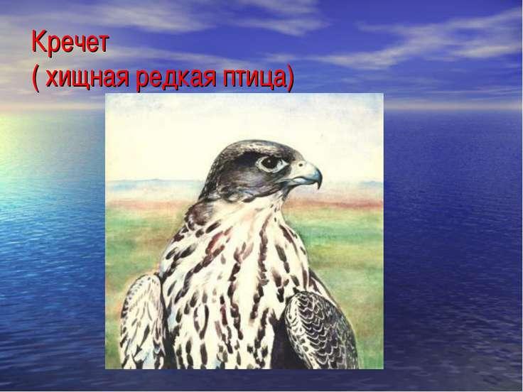 Кречет ( хищная редкая птица)