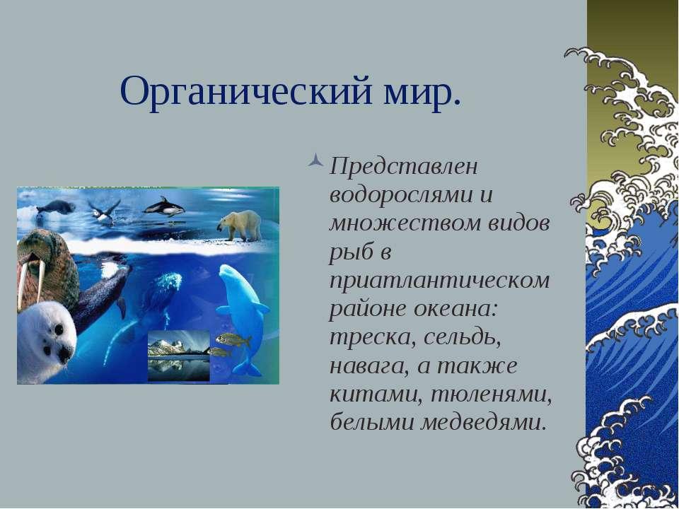 Органический мир. Представлен водорослями и множеством видов рыб в приатланти...