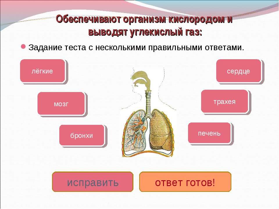 Обеспечивают организм кислородом и выводят углекислый газ: Задание теста с не...