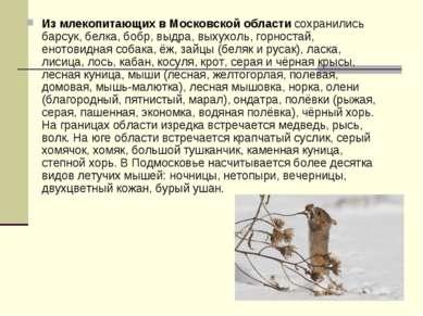 Из млекопитающих в Московской области сохранились барсук, белка, бобр, выдра,...