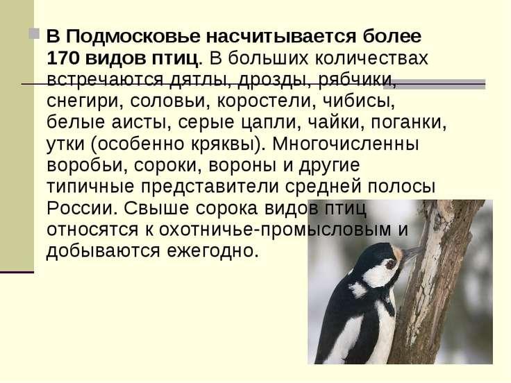 В Подмосковье насчитывается более 170 видов птиц. В больших количествах встре...
