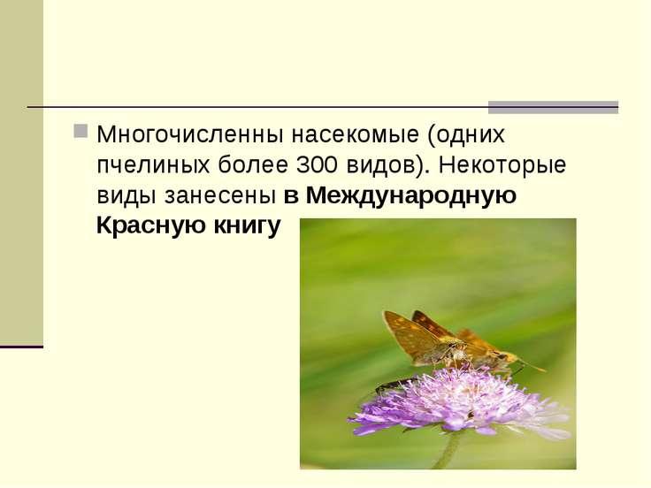 Многочисленны насекомые (одних пчелиных более 300 видов). Некоторые виды зане...