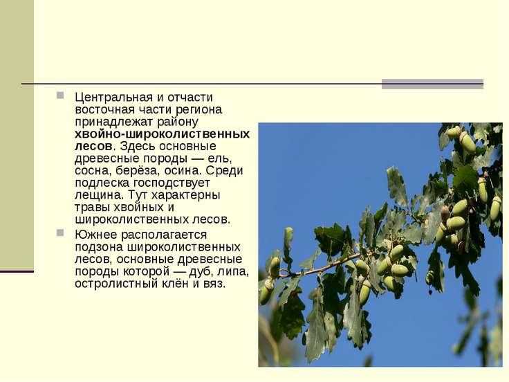 Центральная и отчасти восточная части региона принадлежат району хвойно-широк...