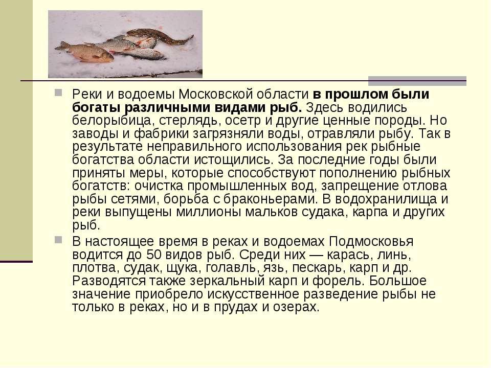 Реки и водоемы Московской области в прошлом были богаты различными видами рыб...