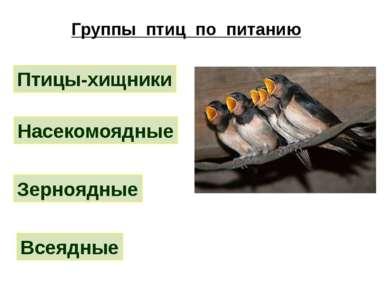 Группы птиц по питанию Птицы-хищники Насекомоядные Зерноядные Всеядные