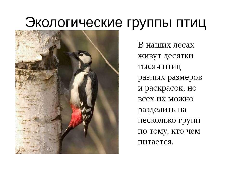 В наших лесах живут десятки тысяч птиц разных размеров и раскрасок, но всех и...