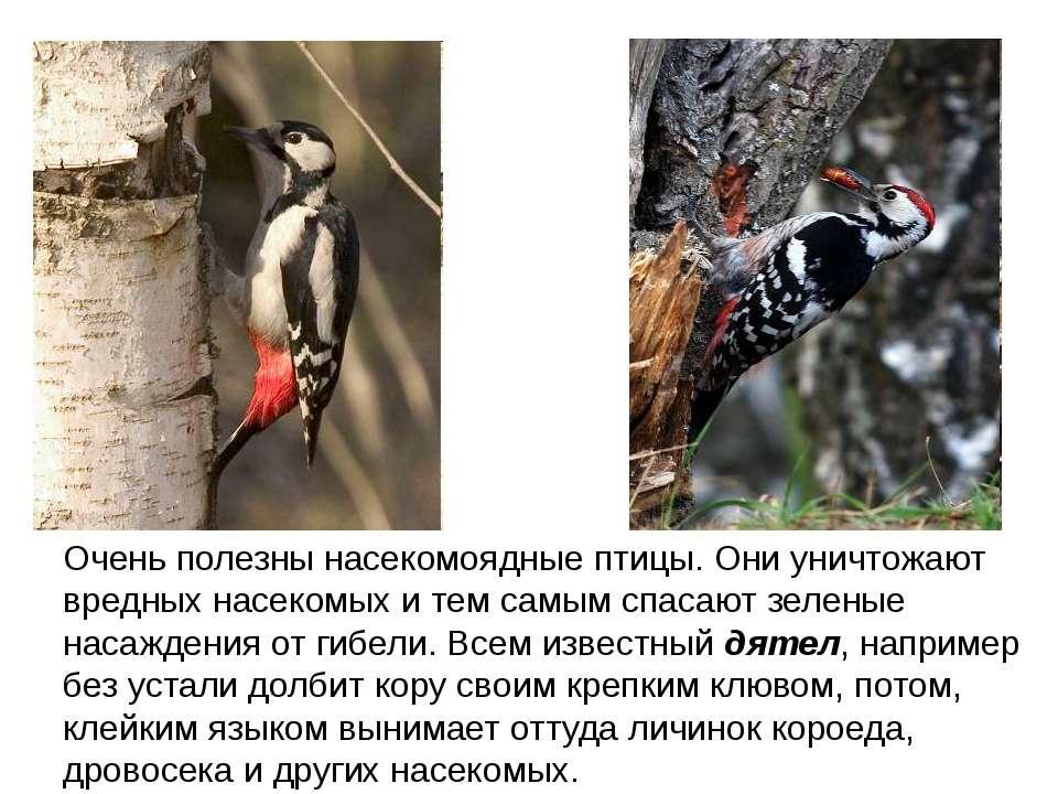Очень полезны насекомоядные птицы. Они уничтожают вредных насекомых и тем сам...