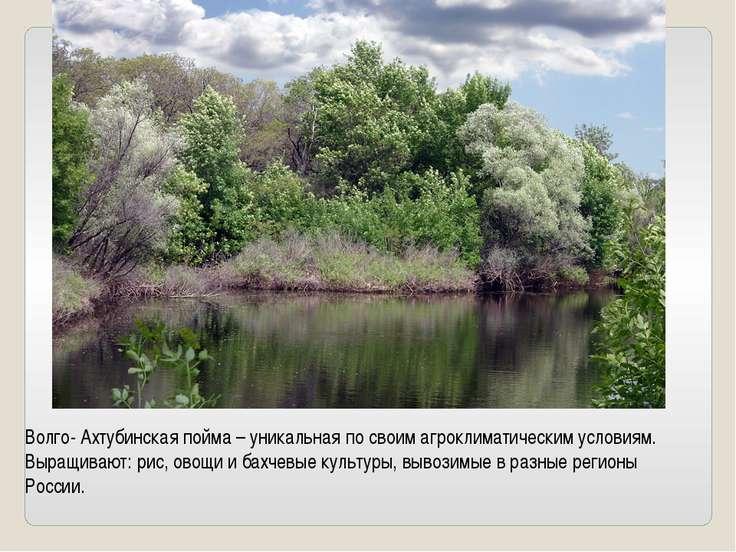Волго- Ахтубинская пойма – уникальная по своим агроклиматическим условиям. Вы...