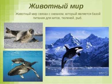 Животный мир Животный мир связан с океаном, который является базой питания дл...