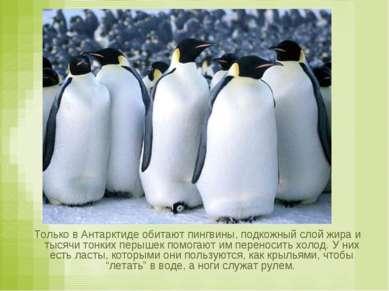 Только в Антарктиде обитают пингвины, подкожный слой жира и тысячи тонких пер...