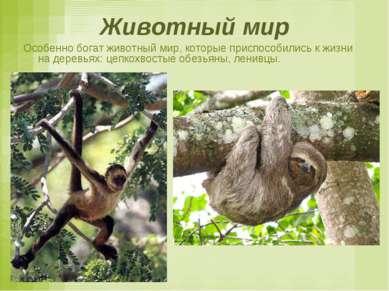 Животный мир Особенно богат животный мир, которые приспособились к жизни на д...