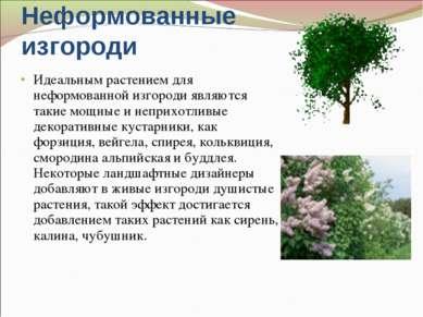 Неформованные изгороди Идеальным растением для неформованной изгороди являютс...