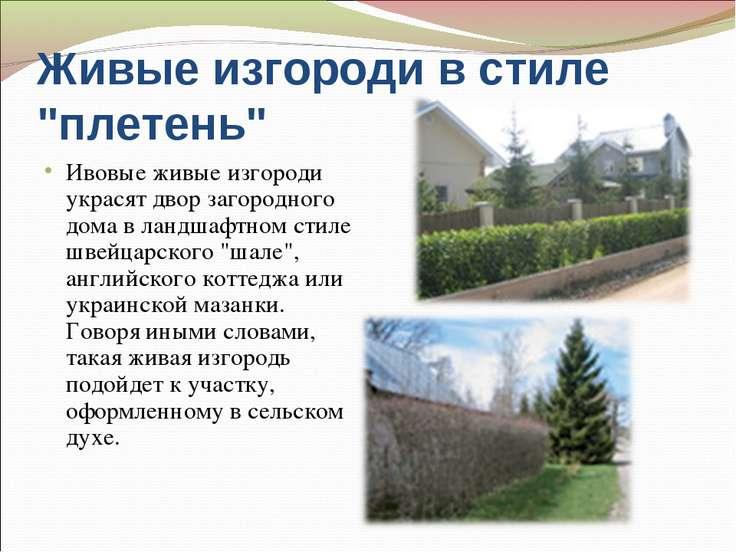 """Живые изгороди в стиле """"плетень"""" Ивовые живые изгороди украсят двор загородно..."""
