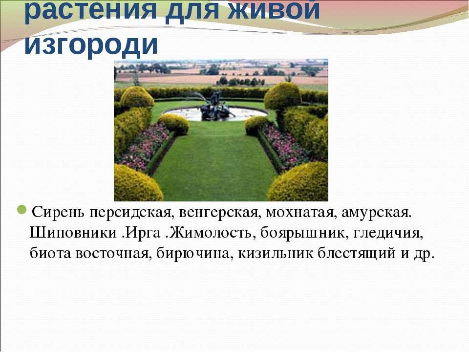 Наиболее подходящие растения для живой изгороди Сирень персидская, венгерская...