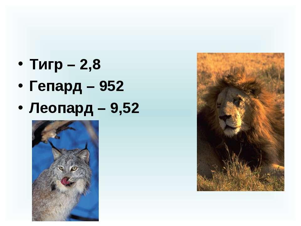 Тигр – 2,8 Гепард – 952 Леопард – 9,52